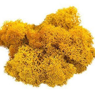 Dried Reindeer Moss