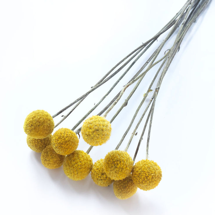 Dried Yellow Craspedia ' Billy Buttons'