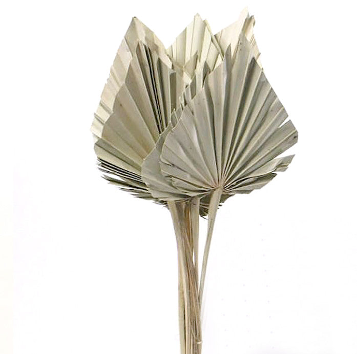 Dried Natural Palm Spear Leaves - From Victoria Shop