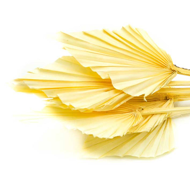 Dried Bleached Palm Spear Leaves - From Victoria Shop