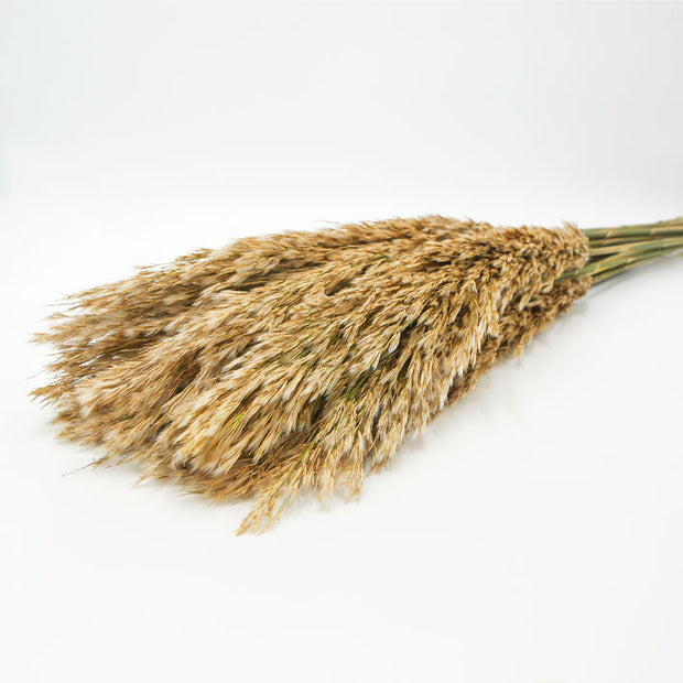 Dried Plume Reed Grass