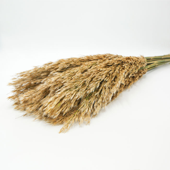 Dried Plume Reed Grass - From Victoria Shop