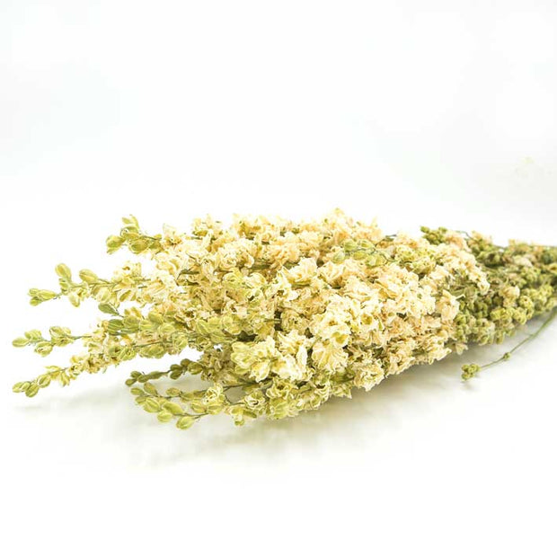 Dried White Delphinium Flowers - From Victoria Shop