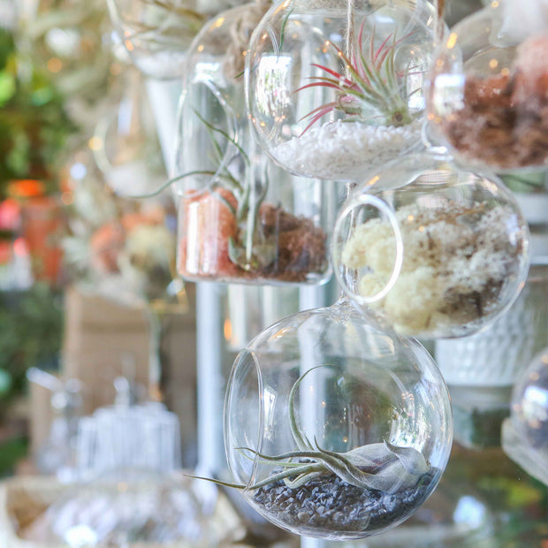 Glass Hanging Terranium- Large