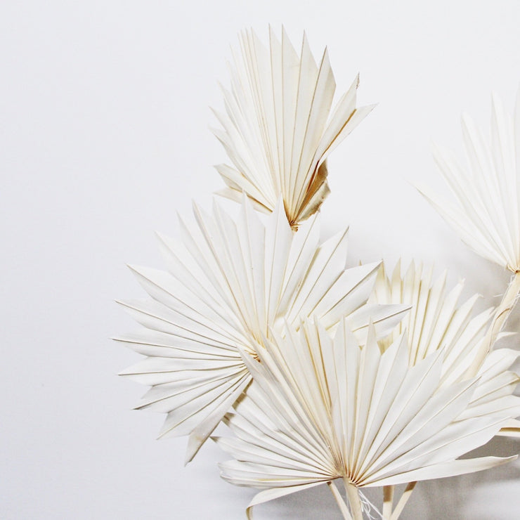 White Dried Fan Palm Leaves