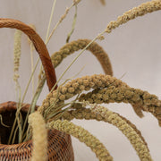 Dried Green Setaria Italica