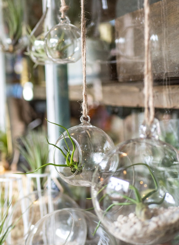 Glass Hanging Terranium - Small