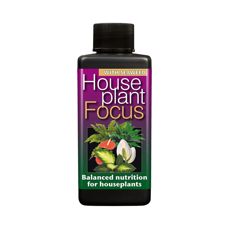 House plant focus plant feed