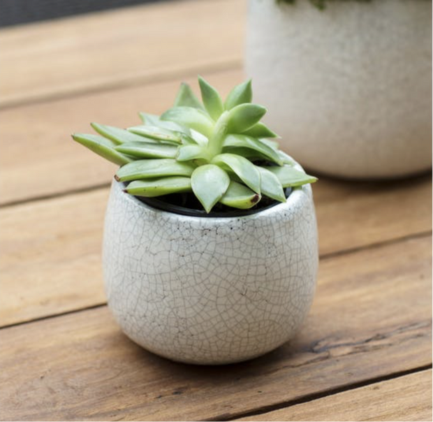 Ravello White Crackle Glazed Plant Pot