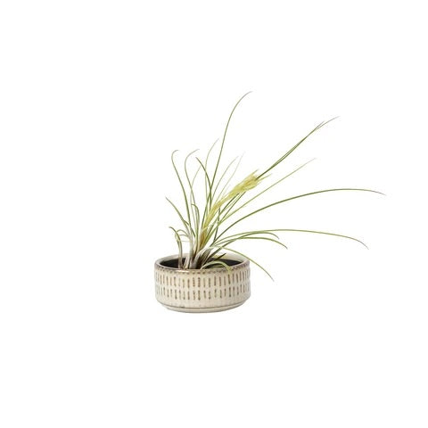 Ceramic Air Plant Dish