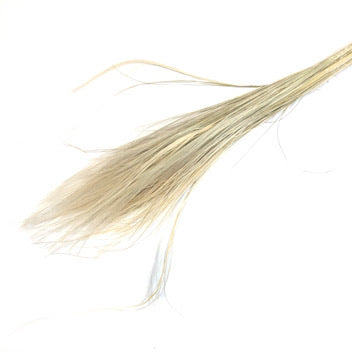 Dried Stipa Pennata Grass