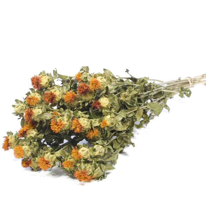 Carthamus Orange Dried Flowers