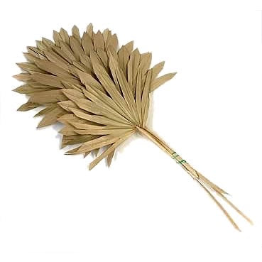 Natural Dried Fan Palm Leaves