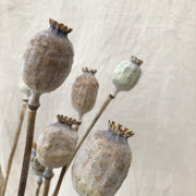 Dried Natural Papaver Poppy Heads