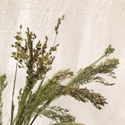 Dried Natural Green Panicum