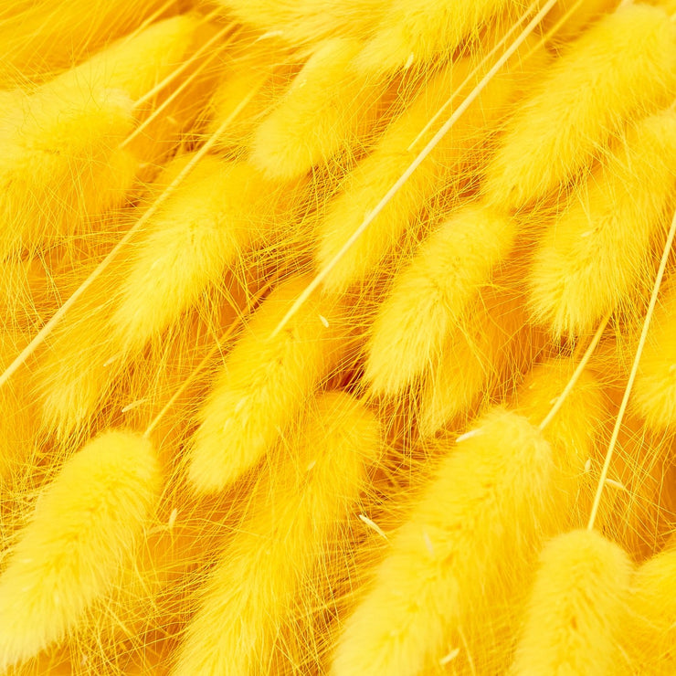 Dried Yellow Lagurus