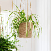 Jute hanging basket planter