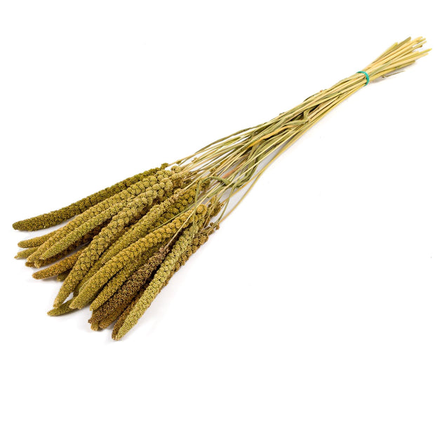 Dried Setaria Italica - From Victoria Shop