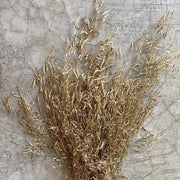 Dried Muni Grass