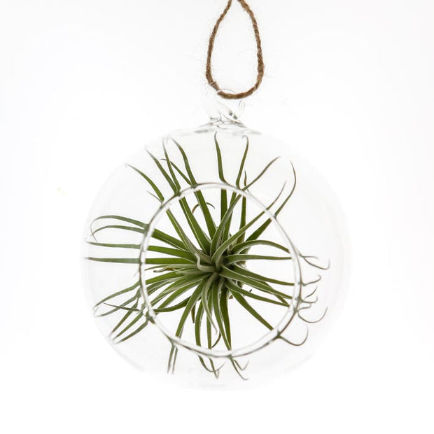 Glass Hanging Terrarium- Medium