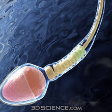 3D Reproductive Cell