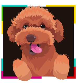 Caniche Rojo (Red Poodle)