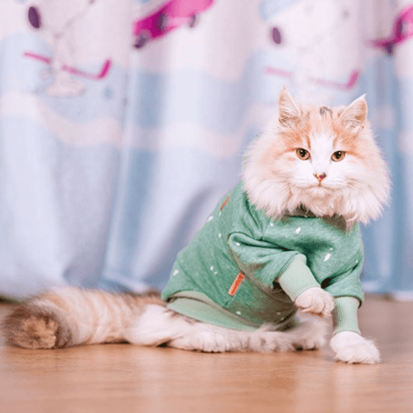 cat sports hoodie green