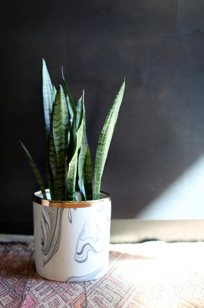 Medium Marbled Porcelain Planter with Gold Rim