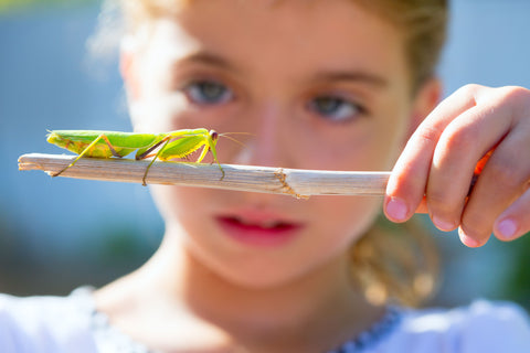 Girl looking at praying mantis on a stick she is holding
