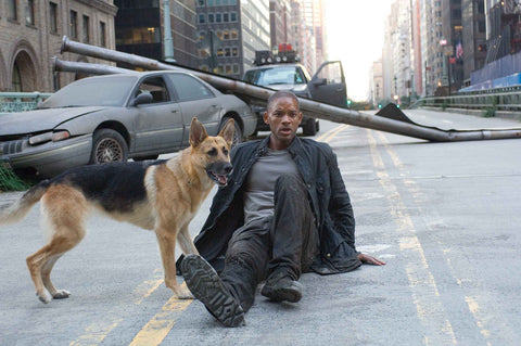 "Will Smith and dog in ""I Am Legend"""