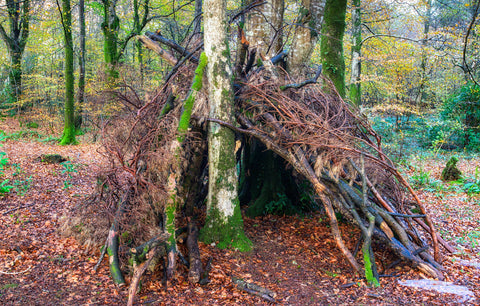 A survival shelter built by leaning sticks and logs against a tree