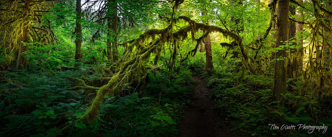 Into the Rainforest, Columbia River Gorge, Oregon