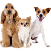 Promising Benefits of RBAC on Canines