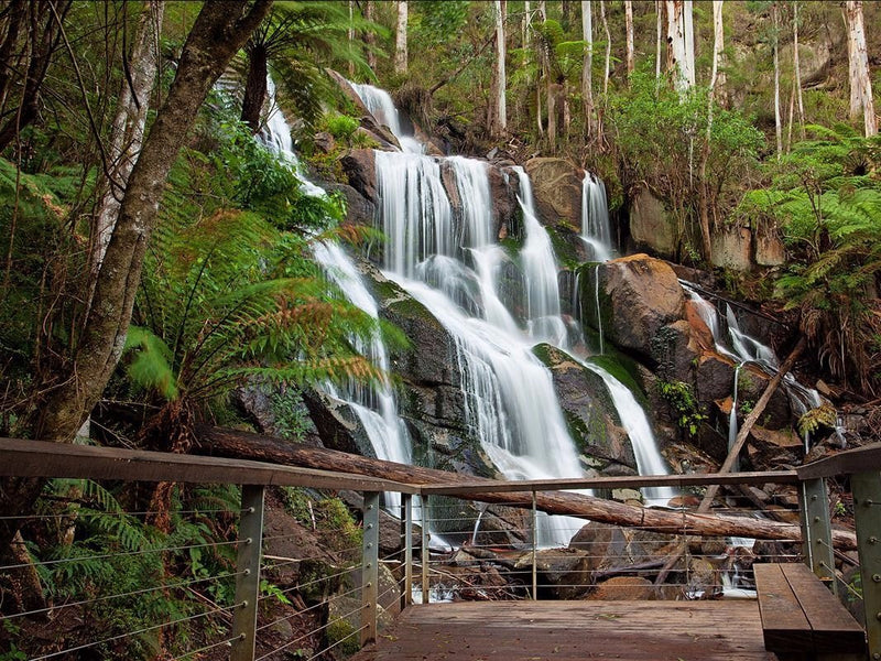 Camping Site Review: Toorongo Falls Campground, VIC