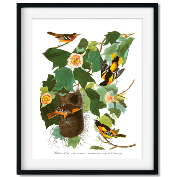 Vintage Bird and Botanical Fine Art Prints - Series No. 5