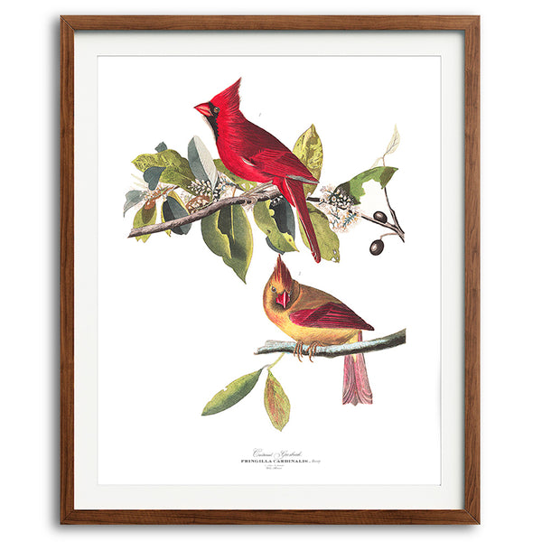 Illinois Cardinal State Bird Audubon Art Print available at VJ Creative Lifestyle