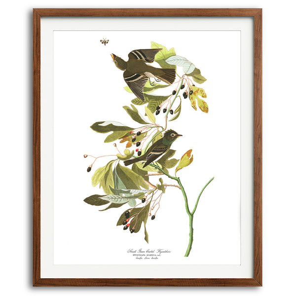 Green Crested Flycatcher Audubon Art Print available at VJ Creative Lifestyle