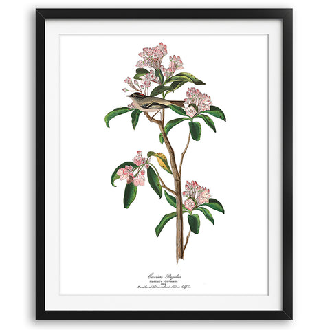 Vintage Audubon Hummingbirds Art Print - No. 02 available at VJ Creative Lifestyle