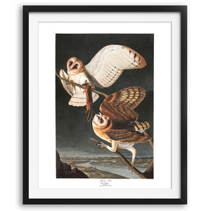 Barn Owl Art Print available at VJ Creative Lifestyle