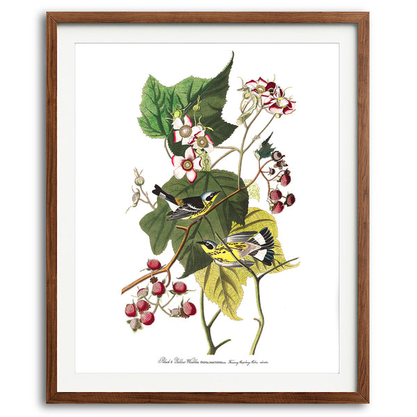 Black and Yellow Warblers Art Print available at VJ Creative Lifestyle