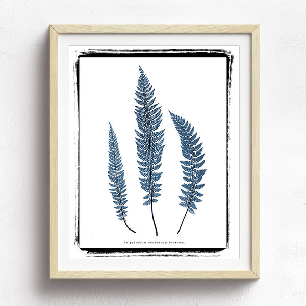 Vintage Botanical Ferns - Series 03