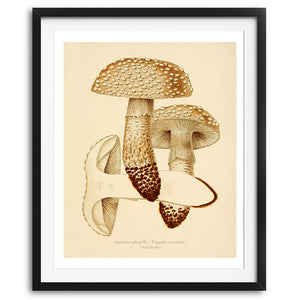 Mushrooms - No. 01 available at VJ Creative Lifestyle