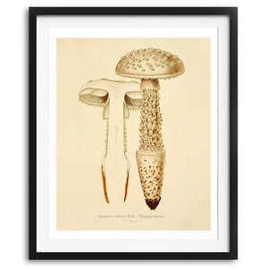 Vintage Mushrooms Art Print - No. 02, available at VJ Creative Lifestyle
