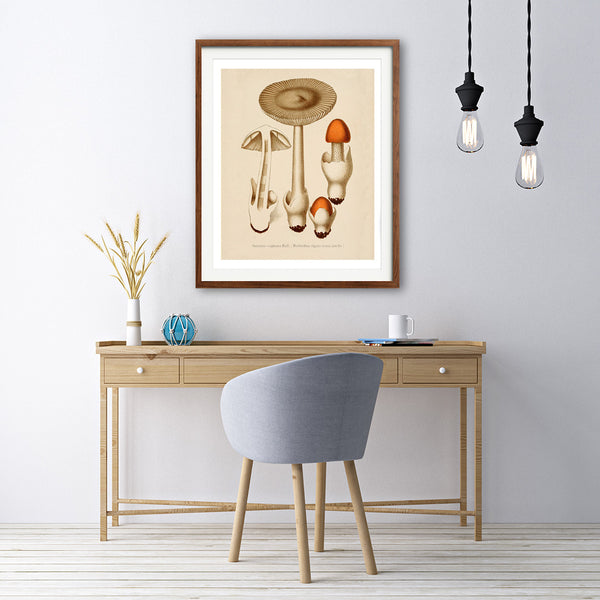 Vintage Mushrooms Art Print - No. 04, available at VJ Creative Lifestyle
