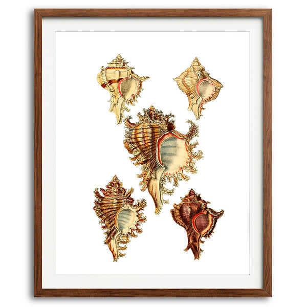 Nautical Seashells Art Print - No. 01 - Available at VJ Creative Lifestyle