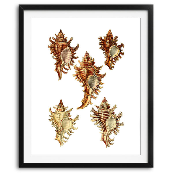 Vintage Seashells Art Print - No. 02 - Available at VJ Creative Lifestyle