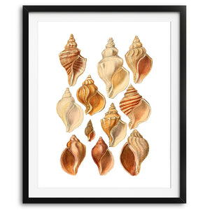 Antique Seashells Art Print - No. 03 - Available at VJ Creative Lifestyle