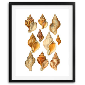 Seashells Wall Art Print - No. 04 - Available at VJ Creative Lifestyle