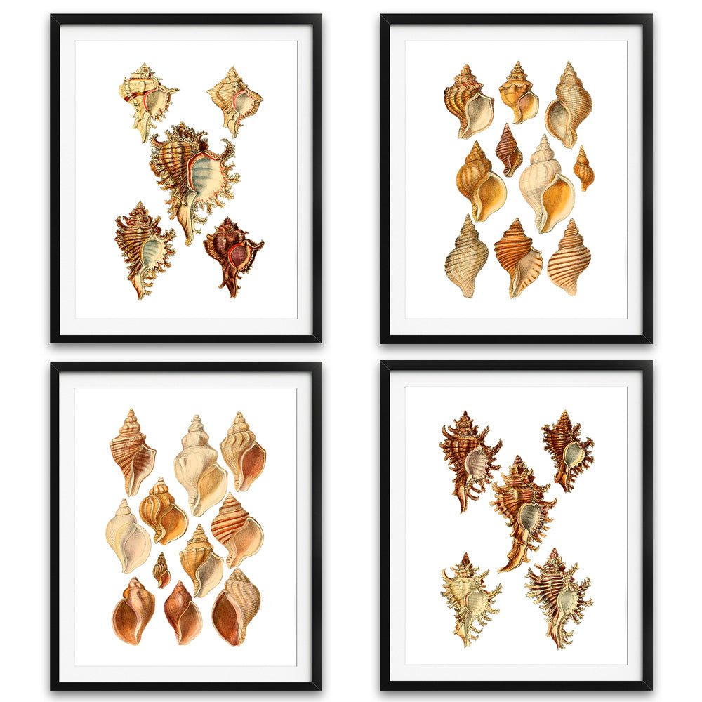 Coastal Seashell Art Prints - Set of 4 - Available at VJ Creative Lifestyle