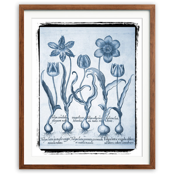 Tulips Art Print - Blue Series No. 01 - Available at VJ Creative Lifestyle
